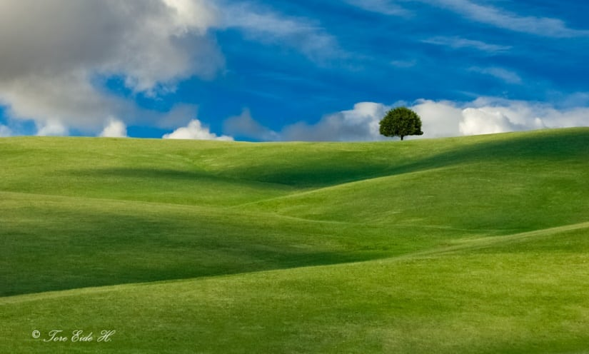Simple Landscape Design Pictures