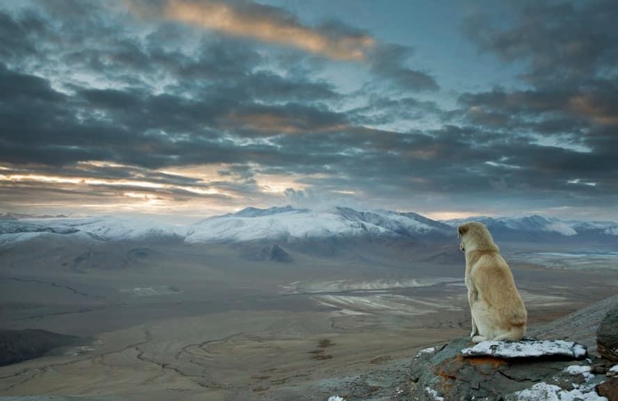 köpek ve doğa ümit blog